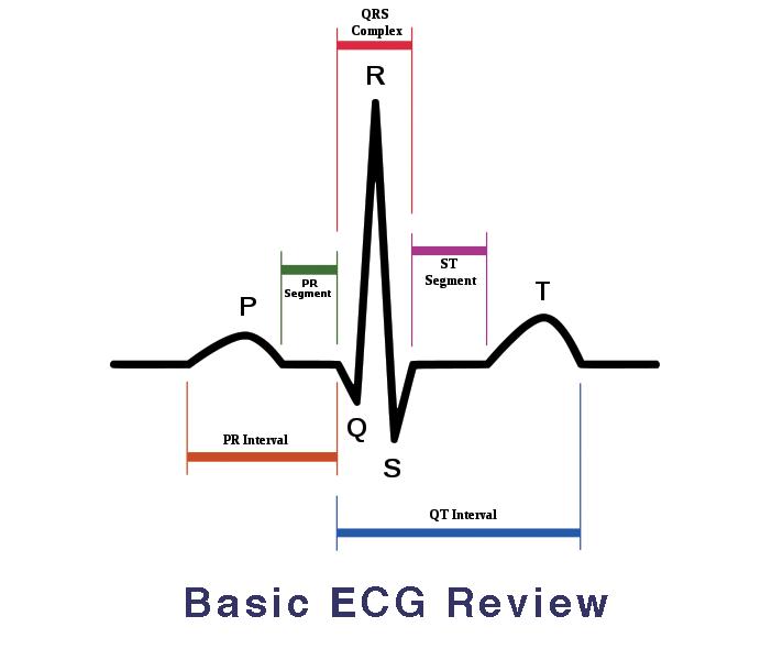 ECG - Iran Bio Medical